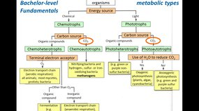 MMD3 - The microbial carbon cycle (continued)