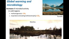 MMD2 - The microbial carbon cycle